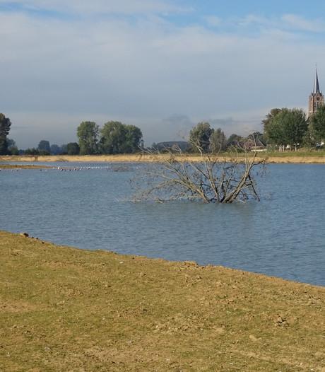 Riviergeul Maasbommel bijna klaar