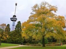 'Aantal bomen park bij Euromast levensgevaarlijk'
