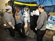 Honderden New Yorkse katten in quarantaine om vogelgriep