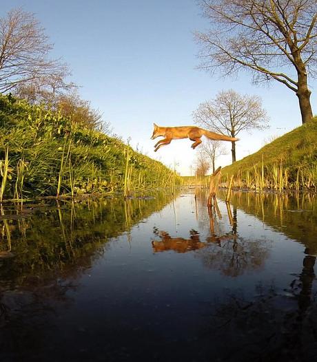 Amsterdam Wildlife wint publieksprijs op natuurfilmfestival
