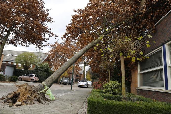 De boom waaide tegen de woning aan.