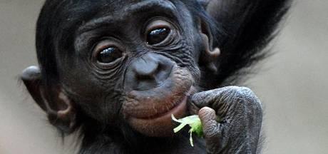 Pratende apen? 'Planet of the Apes is niet zo ver gezocht'