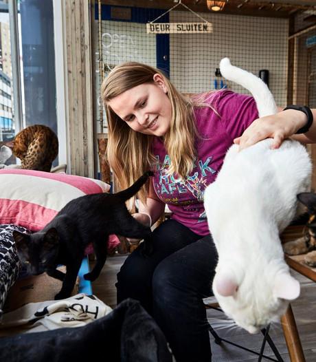 Crowdfunding voor kattencafé in Amersfoort