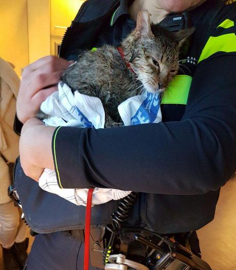 Omstanders redden door het ijs gezakte kat bij de Meent
