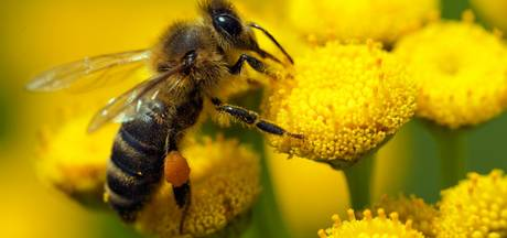 Kwekerij onder vergrootglas wegens bijensterfte