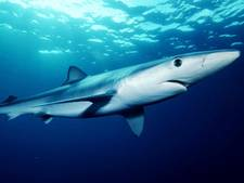 Haai bijt man in hand aan de Spaanse Costa del Sol