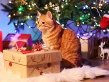 Aantal kerstboomberichten piekt op social media