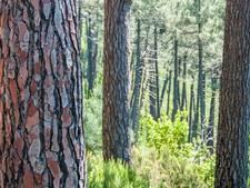 Honderden exoten weg uit Langenboomse Bossen
