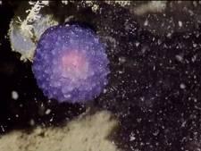 Lichtgevende paarse bol op zeebodem raadsel voor onderzoekers