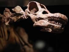 Nieuwe theorie over uitsterven dinosauriërs