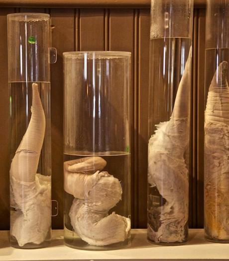 Penissen op sterk water in IJslands museum