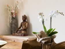 Kweker wekt uitgebloeide orchidee weer tot leven