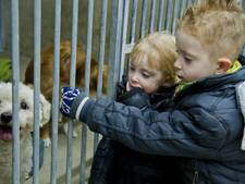 Tralies weg in dierenasiel 't Julialaantje