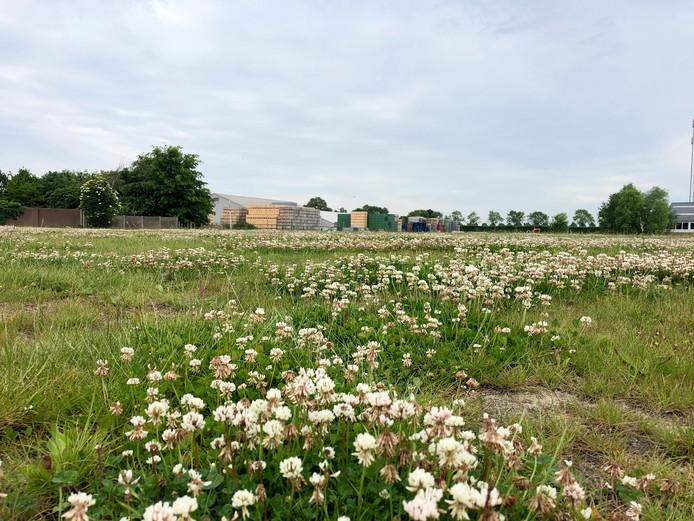 Plan Kelders in het centrum van Krabbendijke. Op de achtergrond is fruitbedrijf Vogelaar Vredehof te zien.