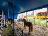 Circus strijkt neer in Hoogerheide: 'We zaten met onze handen in het haar'