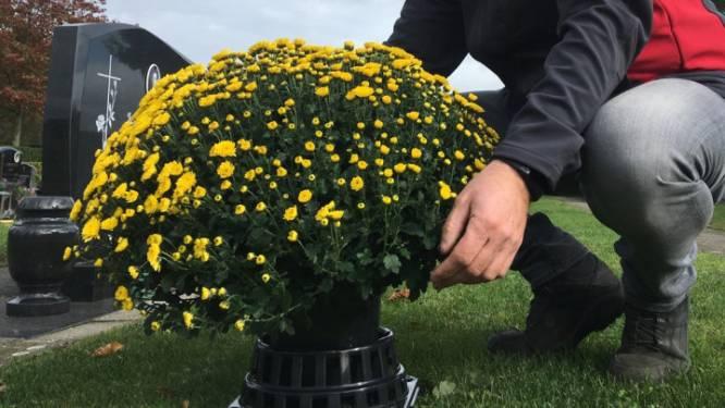 """Gratis chrysantenhouders op begraafplaatsen: """"Graaf de chrysanten niet in"""""""