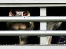 NVWA voert extra controles uit op dierenwelzijn vanwege verwachte hitte