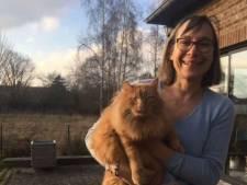 Ce chat parcourt 800km en Blablacar pour retrouver sa famille