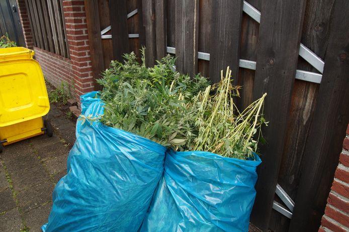 De hennep werd door de politie in beslag genomen.