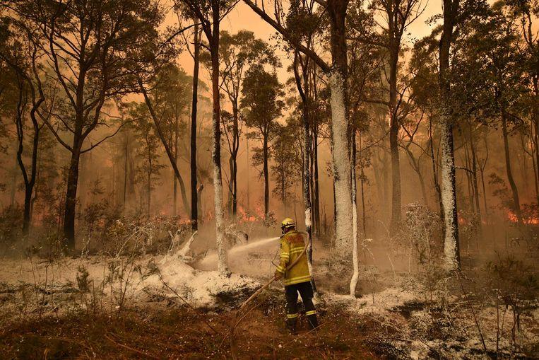 Een brandweerman spuit een brandvertragende stof op de bomen in een bos in New South Wales. Beeld AFP