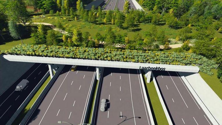 Ook in Asse zijn er plannen voor de bouw van een ecoduct over de ring.In het midden van de oversteek wordt ook een pad voor voetgangers en fietsers aangelegd.