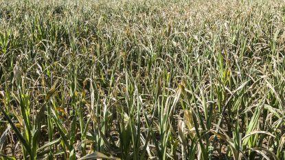 Velt Hamme organiseert vijfde oogstfeest