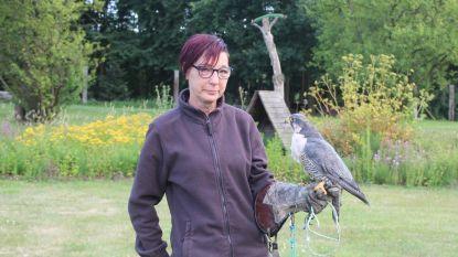 Weekend vol roofvogels, Vikingen, vuurshow en oude ambachten bij Valkerij de Kaproen