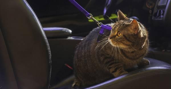 Kat in hete auto 250 euro boete nieuws - Enlever odeur urine chien ...