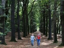 Van 2035 naar 2050: dit is waarom de Utrechtse Heuvelrug de klimaatdoelen vijftien jaar opschuift