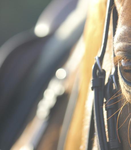 Duits meisje (13) naar ziekenhuis na val van paard op strand Domburg