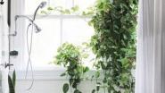 Interieurtrend: hang eens planten in je douche voor een tropisch gevoel