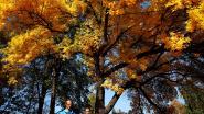 November bij de drie warmste novembermaanden ooit