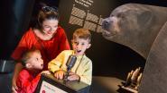 MUSEUM FOR KIDS. Waar komt de teddybeer vandaan?