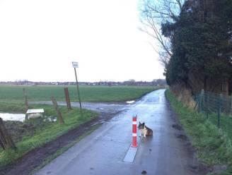 Kwalestraat en Dries richting Aaigem opnieuw open, opnieuw tractorsluis in Visser