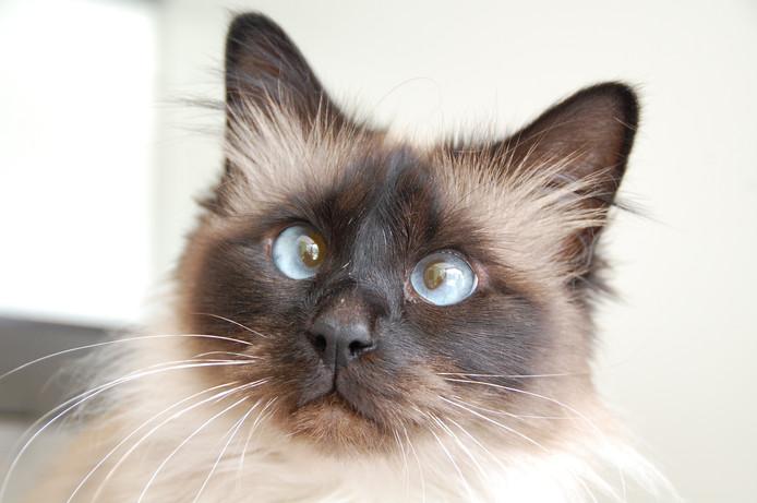 Alle katten in het DOC Oldenzaal zijn negatief getest op het kattenleukemievirus en kunnen daarom bij een nieuwe baas worden geplaatst.