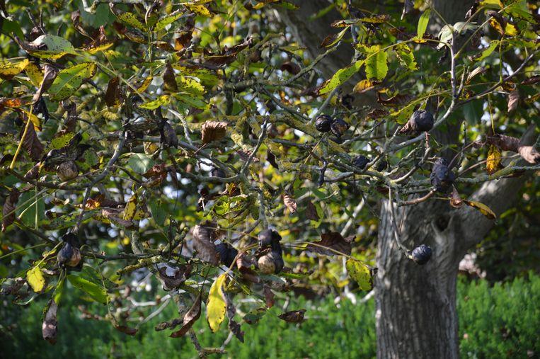 Je bent ze zeker al eens in het bos tegengekomen: noten met een kiemscheutje aan. Of miniboompjes die ineens uit de grond schieten. Vaak zijn muizen of eekhoorns de 'oorzaak' van een kiemende noot; zij verstoppen ze in de aarde. Uit okkernoten, kastanjes of hazelnoten kun je perfect zelf je eigen boom kweken. Nog meer tips voor onderhoud van je tuin vind je in dit dossier.
