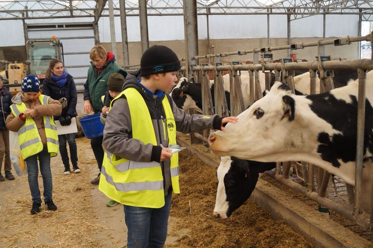 Leerlingen van de Veldschool in Dentergem kregen een rondleiding op een melkveebedrijf in Tielt.