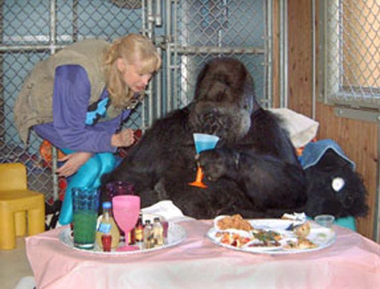 Koko bij de viering van haar dertigste verjaardag met dr. Penny Patterson, directeur van de Gorilla Foundation.