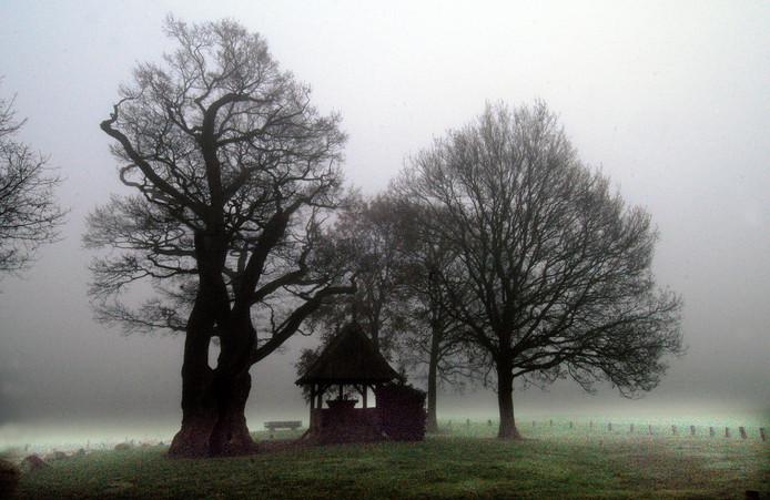 De Kroezeboom in de mist. Foto: Riet Vos