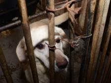 Hoogleraar en Dierenbescherming na incidenten: Straf bij dierenleed kan en moet harder