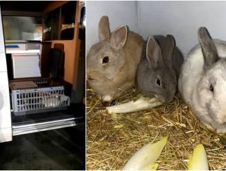 Man dumpt elf tamme konijntjes, maar wordt op heterdaad betrapt