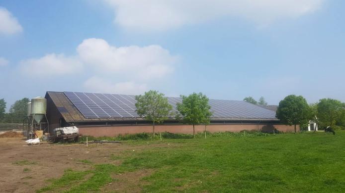 De 300 zonnepanelen op het dak van een boer in Breukelen.