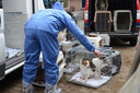De Dierenbescherming haalt verwaarloosde honden op bij een fokker in Lettele.