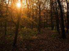 IVN-project 'Tiny Forest' brengt kinderen dichter bij de natuur in Den Bosch