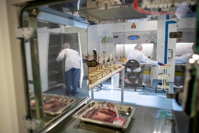 Het meeste stamcelmateriaal bevindt zich momenteel in een lab in de Poolse hoofdstad Warschau