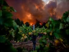 L'un des plus célèbres vignobles américains s'embrase: catastrophe dans la Napa Valley