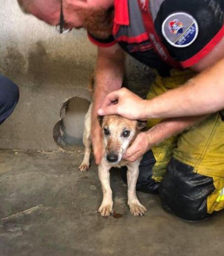À Liège, un petit chien coincé entre deux murs a été sauvé par les pompiers