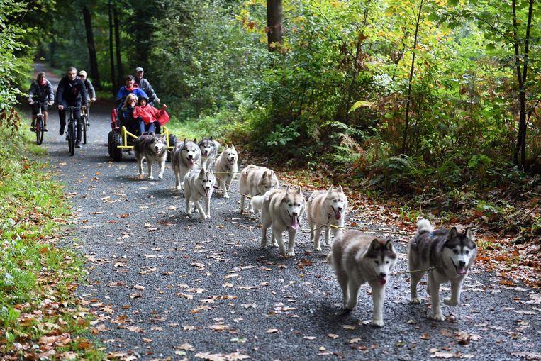 De hondenslee wordt voortgetrokken door zo maar eventjes tien honden.