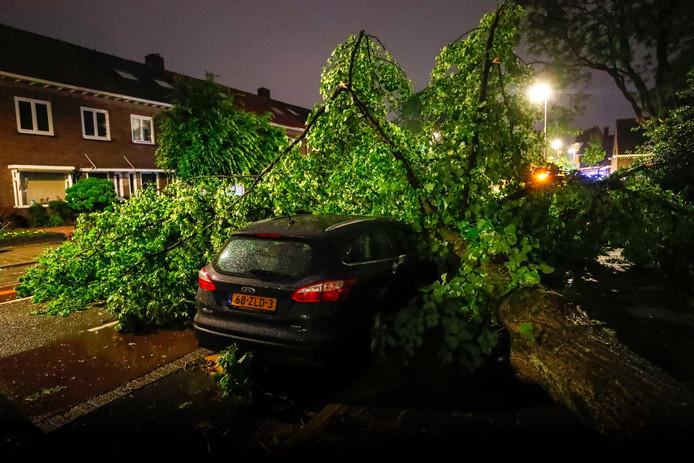 Ook in de Winkelstraat in Eindhoven waaiden vorige week dinsdag bomen om.
