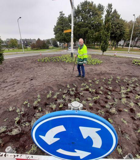 Rotonde in Geesteren opgefleurd met kattenkruid en geraniums